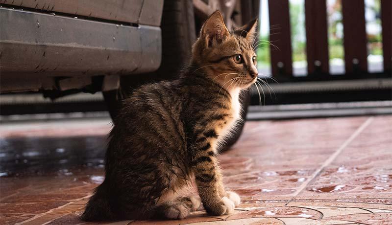 駐車場やボンネット内の猫よけ対策